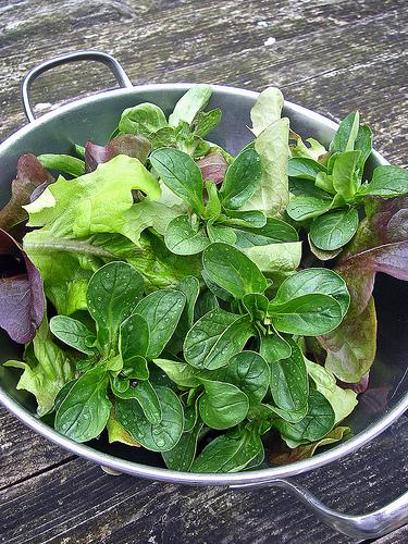 Salaternte (lebenswandeln)